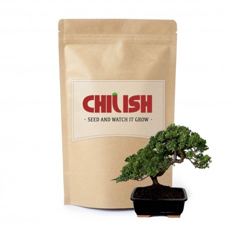 Japanese Zelkova Bonsai Seeds